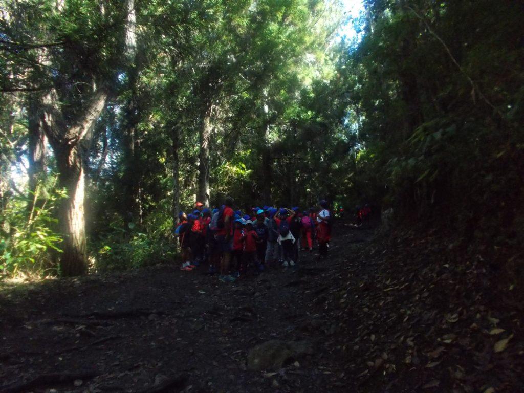 forêt plateau des chênes Cilaos