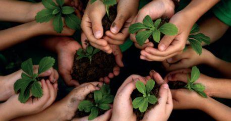 Des techniques pour un jardin en bonne santé