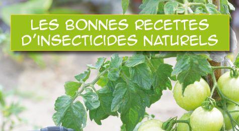Les bonnes recettes d'insecticides naturels