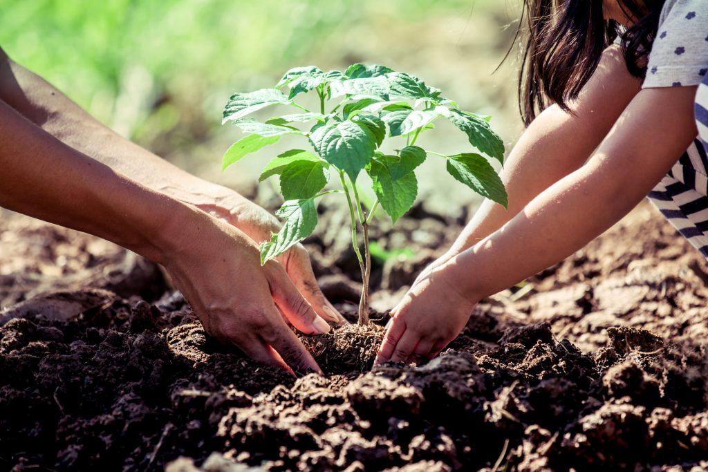 Ateliers compostage et jardinage au naturel